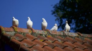 roof maintenance tips   Robinson Roofing