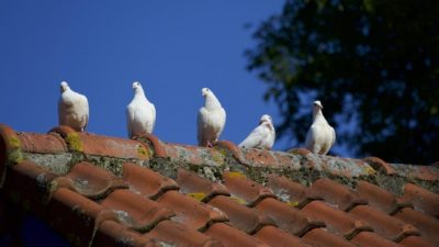 roof maintenance tips | Robinson Roofing